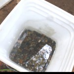 Wash the gravel in a small bucket until the water is clear